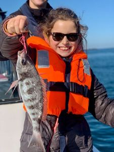Black Seabream — Aventure Pêche Bretagne APB