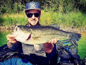 Largemouth Bass — Julien Ravaux