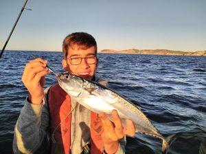 Pacific Bonito — Fishing Porquerolles
