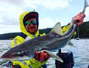 Starry Smooth-Hound — Yagofish