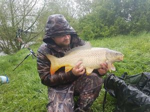 Common Carp — Sébastien Joliot
