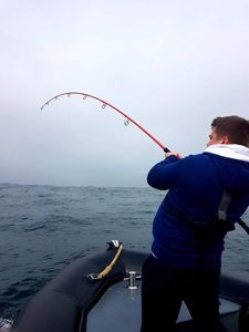 Bluefin Tuna — Maxime Baulard