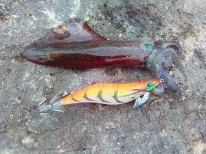 European Squid — Mário Rodrigues