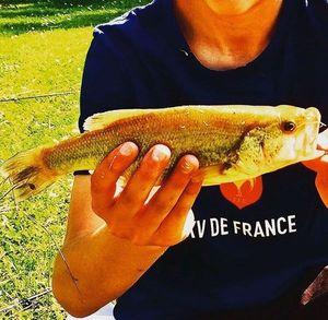 Achigan à Petite Bouche (Black-Bass)
