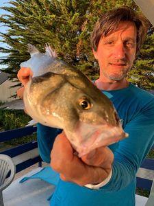European Bass (Seabass) — Tonio Nicolazzi