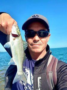 European Bass — Pierre Cacitti