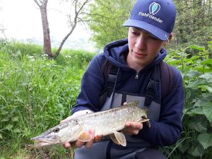 Northern Pike — Matthieu VOLANT