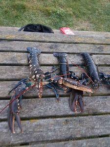 European Lobster — Laurent Guillard