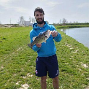 Largemouth Bass — Enzo Montauriol