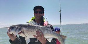 European Bass (Seabass) — FX Charier