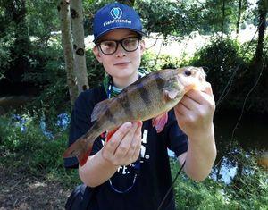 Perche Commune — Yugo Fishing