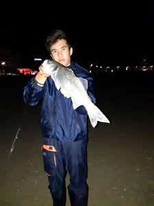 European Bass (Seabass) — Tymeo tr