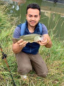 Largemouth Bass — Davy D.