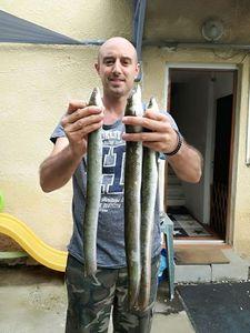Anguille d'Europe (Anguille Commune) — Nicolas Jouanserre