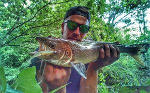 Atlantic Salmon (Landlocked) — Douving Fishing