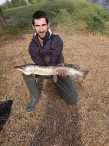 Northern Pike — Jeremie Nasiche