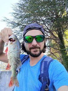 European Perch — Matty Fishermen13