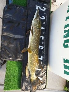 Northern Pike — Fred Qcasrab