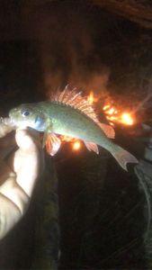 poisson de nuit