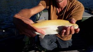 Golden Trout — Flux Fly Fishing