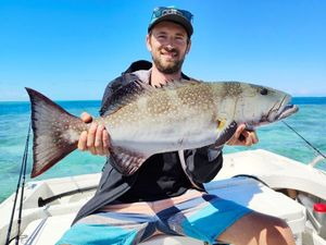 Blacksaddled Coralgrouper — Pils Mc