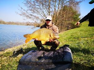 Common Carp — Nicolas Rude