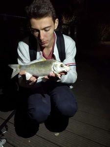 Koï Fish — Lucas Navarro Aubion