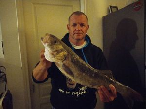 European Bass (Seabass) — michael mercier