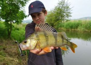 European Perch — Mathys Muller