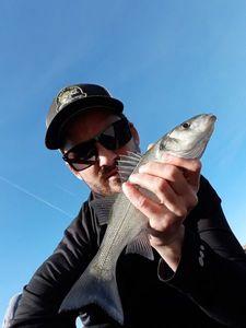 European Bass (Seabass) — Kevin JM