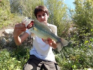 Largemouth Bass — Antonin Tambuzzo
