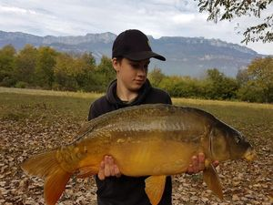 Mirror Carp — Jack Williams