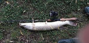 Northern Pike — Thomas Cousse