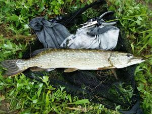 Northern Pike — Jean-Marie Redoules