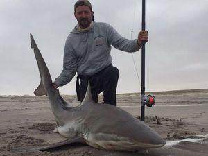 Copper Shark (Bronze Whaler) — Jp Carton
