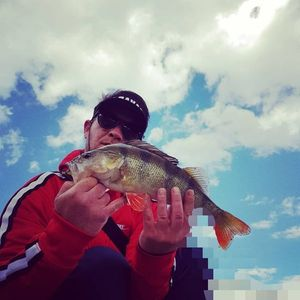 European Perch — Flavino fishing