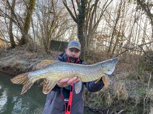Northern Pike — Phlppe André