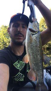 Chub — dod$ale fishing