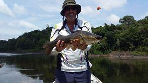 Gilded Catfish — Willy Lafon