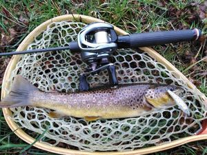 Brown Trout — Gaetan Combes