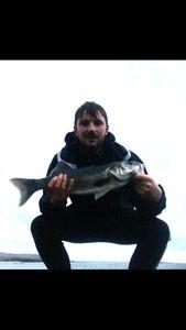 European Bass — Robert David