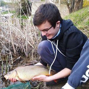 "Common Carp — Joris Massire ""Fisheart"""