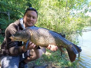Common Carp — Manu Roux