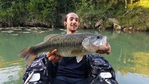 Largemouth Bass — Arthur Joly