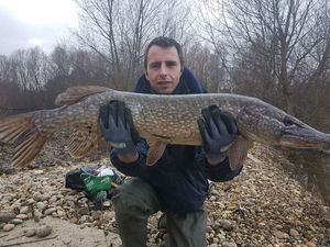 Northern Pike — Brice Zimmerlé