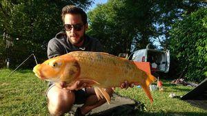 Koï Fish — Jay Massaï