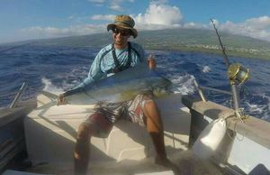 Dolphinfish — Remi Say