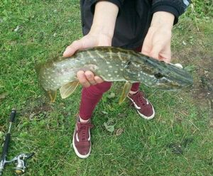 Northern Pike — Nenes PS
