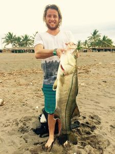 Pacific Snook