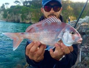 Red Porgy — Raphael Du Merilis